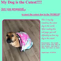 Dog Sample Page